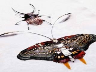 Échantillons Insectes - Design Julien Vermeulen - Talents à la Carte 2016