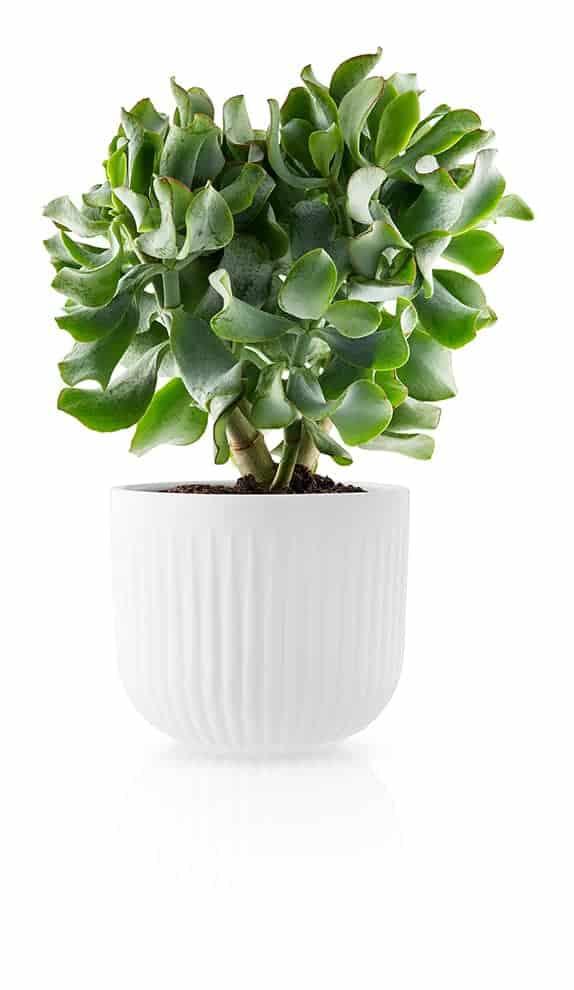 Legio Nova, jardinière en porcelaine. ø 13 ou 15,5 cm. ©Eva Solo